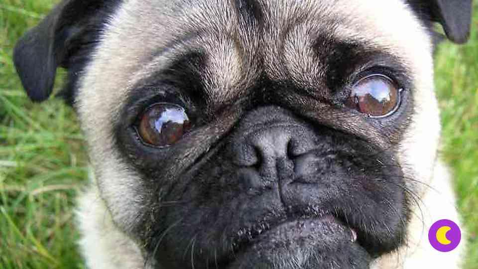 фото плачет собака